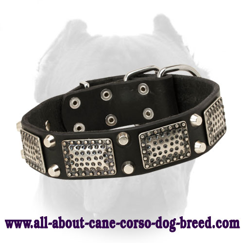 Deluxe Leather Cane Corso Collar with Nickel Plates and Pyramids