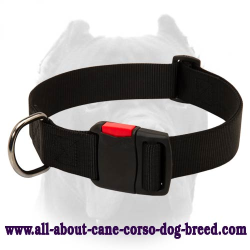 Any Weather Nylon Cane Corso Collar with Smart Quick Release Buckle for Training and Walking