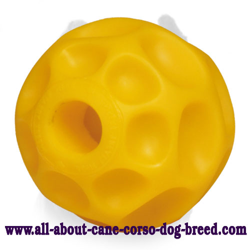 Tetraflex Dog Chew Toy for Cane Corso - Medium