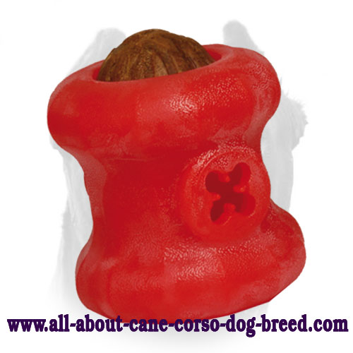 Treat Holder - Tasty Chew Toy for Cane Corso - Large