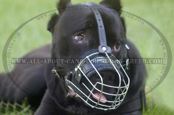 Basket metal Dog Muzzle Light Cane Corso