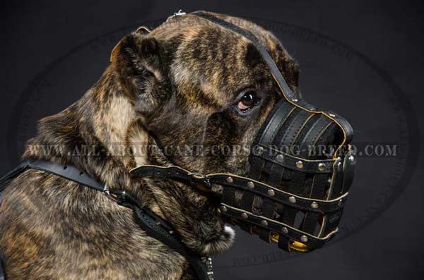 Cane Corso leather muzzle well ventilated padded