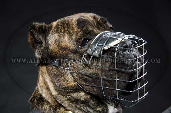 Cane Corso metal cage dog muzzle full protection