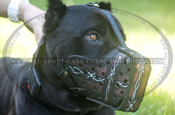 Easy-to-use painted leather dog muzzle for Cane Corso