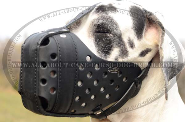 Training Walking Dog Muzzle for Great Dane