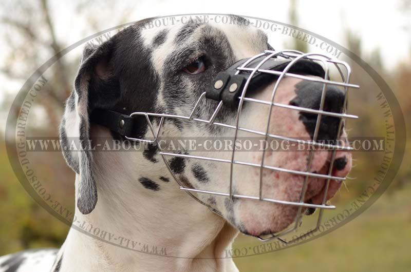 Most Spacious    Wire    Basket    Dog    Muzzle for Great Dane    dog