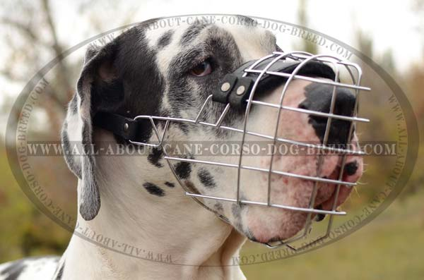 Metal Basket Canine Muzzle for Great Danes