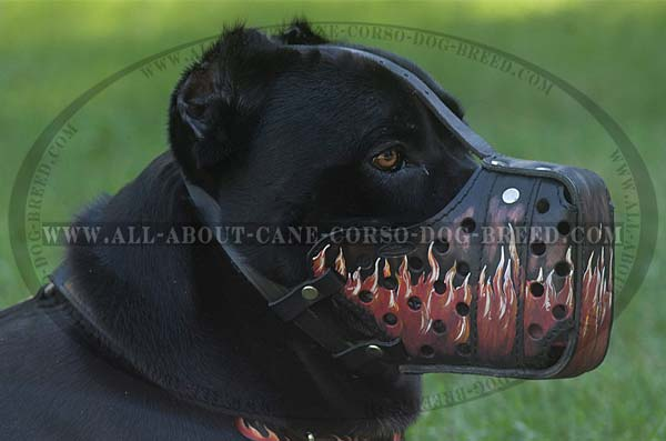 Walking Cane Corso Leather Muzzle