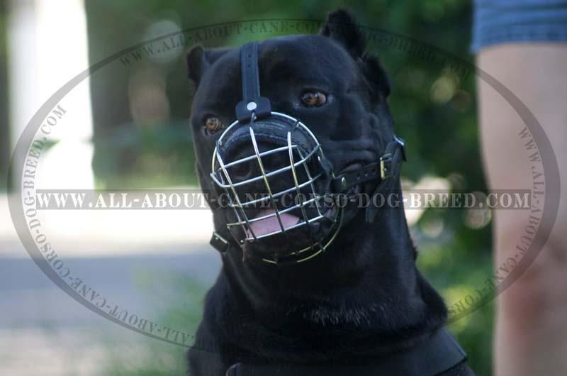 Wearing a metal cage helmet - 3 3