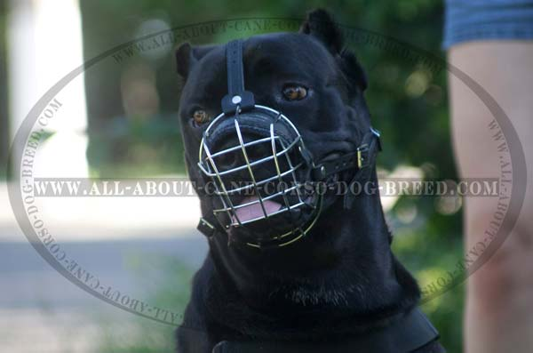 Light Weight Wire Basket Dog Muzzle Mastiff Cane Corso