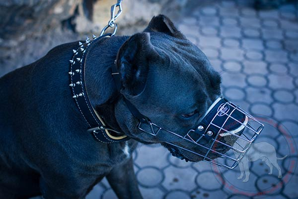 Dog safe metal Cane Corso muzzle