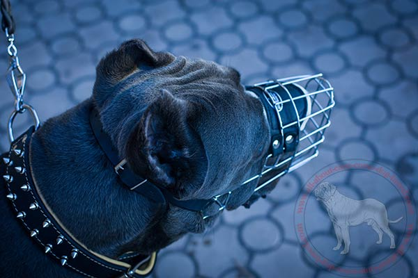 Metal dog muzzle for Cane Corso effective training