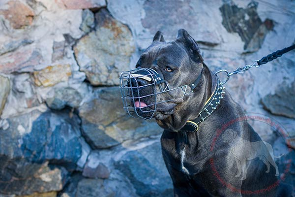 Metal dog muzzle for Cane Corso with padding  on nose