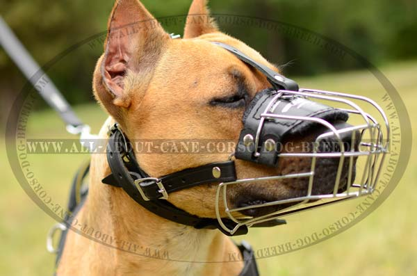 Pitbull Wire Cage Dog Muzzle