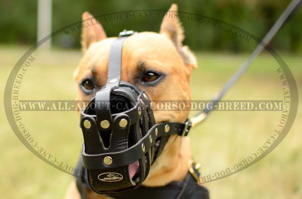 Best Leather Mesh Cage Pitbull Muzzle