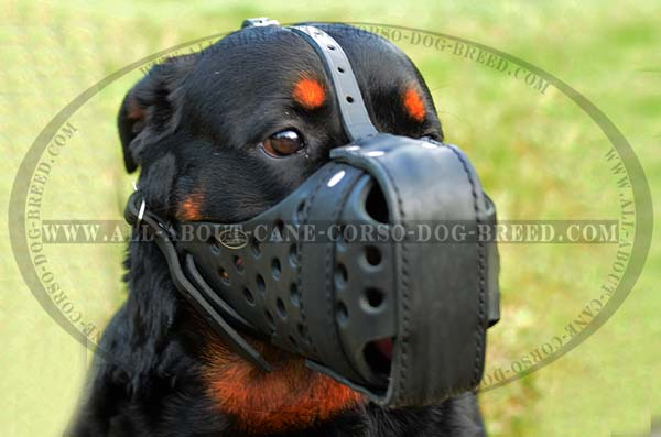 Dependable Walking Leather Rottweiler Muzzle