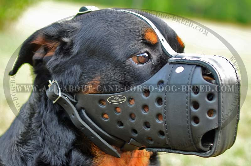 Dog Rottweiler Training Training Rottweiler Dog Muzzle