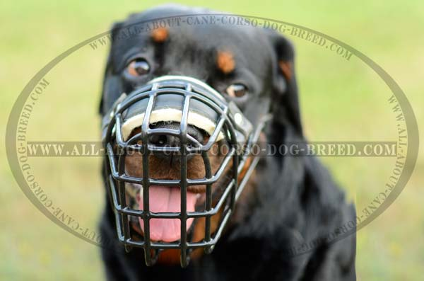 Custom Made Wire Basket Dog Muzzle