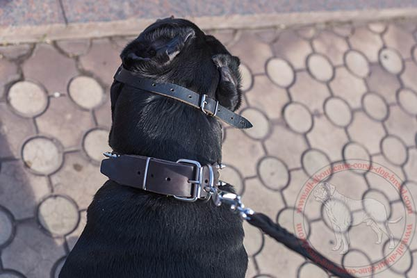 Wire basket Cane Corso muzzle  fixed with one strap