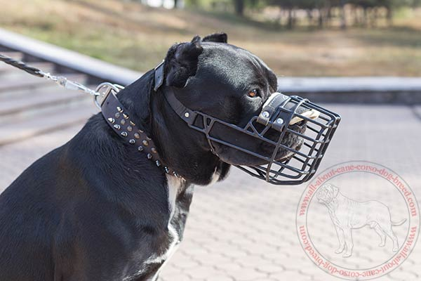 Rubber covered wire dog muzzle for Cane Corso