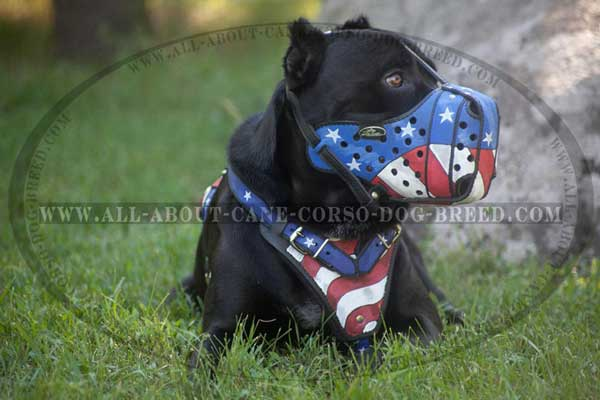 Painted Leather Cane Corso Muzzle for Attack Dog Training