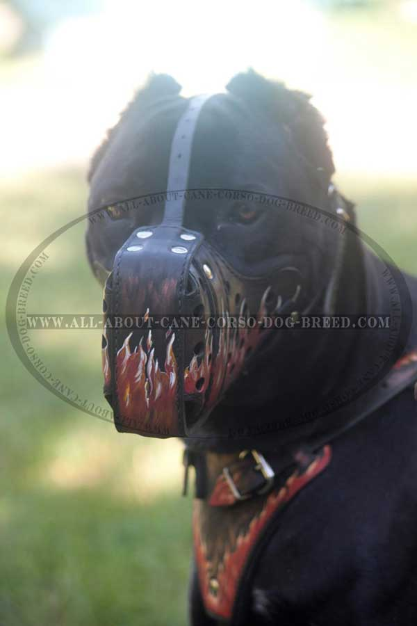 Painted Leather Dog Muzzle Exclusive for Cane Corso