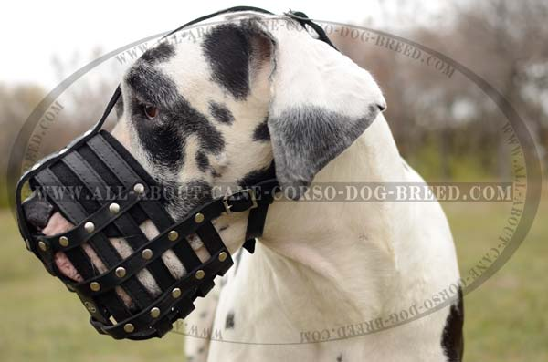 lighweight Leather Basket Dog Muzzle for Frequent Usage