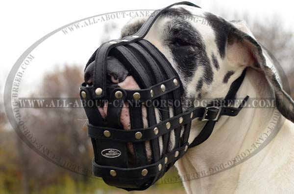 Dependable Leather Mesh Cage Great Dane Muzzle