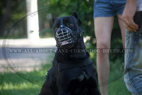 Cane Corso Muzzle Metal Cage Super Lightweight