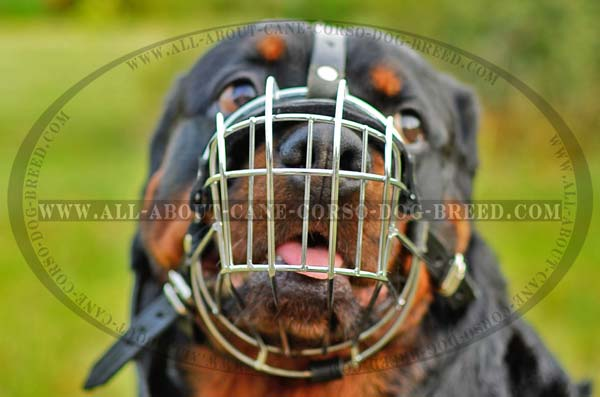 Everyday Wire Basket Dog Muzzle for Rottweilers