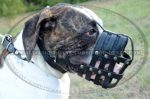 Mesh Cage Canine Muzzle for American Bulldog