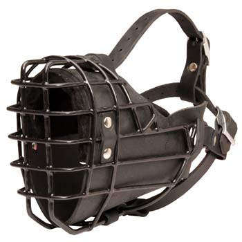 Cane Corso leather dog muzzle for winter training