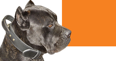 Choose Right Dog Collar for Big Dogs
