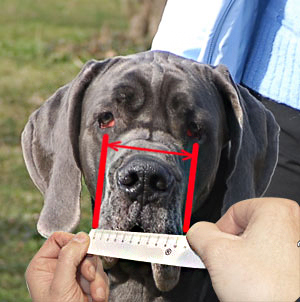 Best way to measure your dog